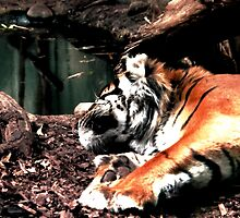 Tiger Dream by meareneko