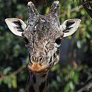 Giraffe  by Kimberly Palmer