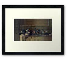 Fluffy Munchkins Framed Print