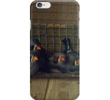 Fluffy Munchkins iPhone Case/Skin