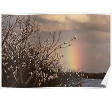 River, Rainbows & Cockatoos Poster
