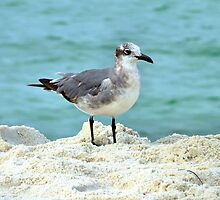 Beach Bird by RickDavis