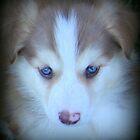 Blue Eyed Beauty. by vette