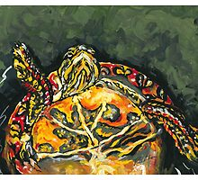 Michigan Painted Turtle by Robin (Rob) Pelton