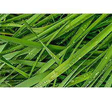 Wet Summer Grass Photographic Print