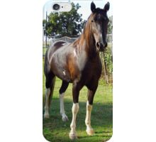 Little Joe, A Sweet Horse iPhone Case/Skin