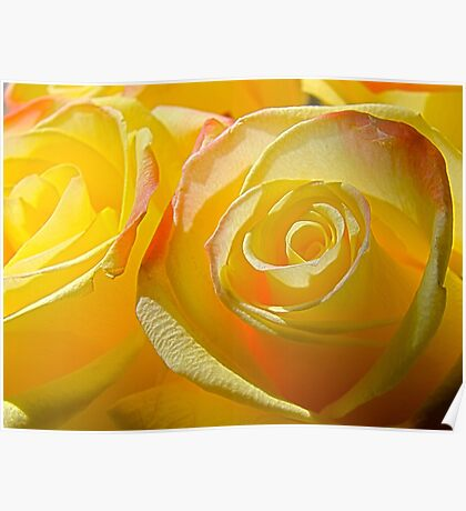 Bright yellow roses 2 Poster