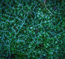 Frosty Grass by mrdoomits