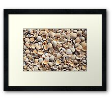 Background Of Beach Shells Framed Print