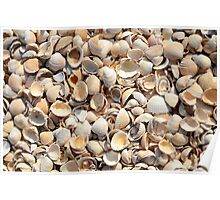 Background Of Beach Shells Poster