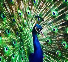 Peacock ~ Impressions by Susie Peek