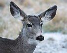 Deer Head by Yukondick