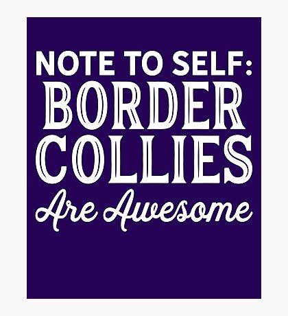 Border Collies  Photographic Print