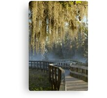 Spanish Moss Sunrise Canvas Print