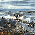 """ Across Oyster Ocean "" by Richard Couchman"