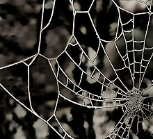The Tangled Web by dunawori