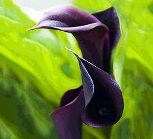 Dark Lilies [iPhone Case] by Sheila Laurens