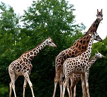 The Extended Family by dunawori