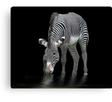 The Zebra and The Mill Pond Canvas Print