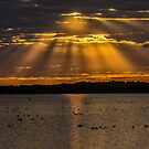 Sun rays over Lake Myakka by Joe Saladino