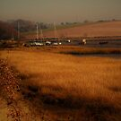 Estuary Saltmarsh, Holbrook by wiggyofipswich