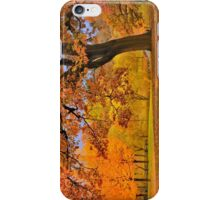 Fall at Larz Anderson iPhone Case/Skin