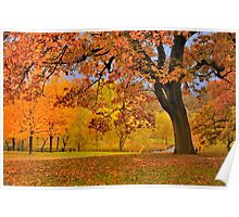 Fall at Larz Anderson Poster