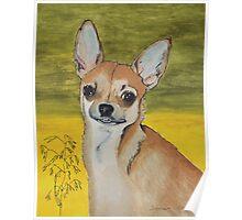 Chihuahua vector Poster