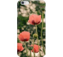 Pink Poppy in late everning light iPhone Case/Skin