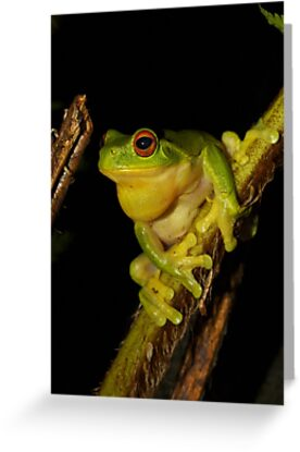 Tree Frog by Rob Price