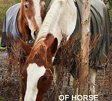 Of horse I love you by Kayleigh Morin