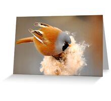 Bearded Tit Greeting Card