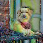 Dog on a balcony by michel bazinet
