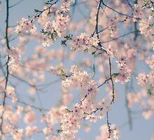 Retro Filter Cherry Blossom by mrdoomits