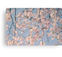 Retro Filter Cherry Blossom Canvas Print