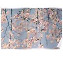 Retro Filter Cherry Blossom Poster