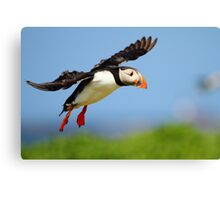 Prepare yourself......It looks like it could be a Puff landing!! Canvas Print
