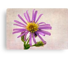 Wild Aster Blossom - Macro  Canvas Print