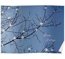 Tree w/Stars Season's Greetings Poster