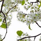 Tree flowers by Scott Ferguson
