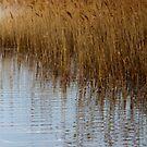 Beach Grass - Jones Beach, NY by KarenDinan