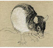 Rat 2 Photographic Print