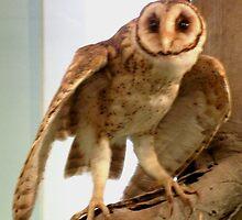 Australian Mask Owl by sandysartstudio