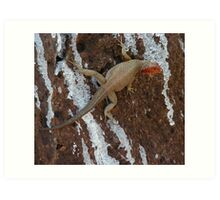 Female Lava Lizard Art Print