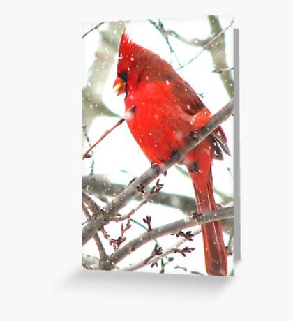 Winter Snack Greeting Card