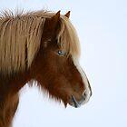 Iceland III by Debbie Ashe