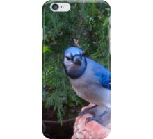 Blue Jays and Peanuts, in the garden and the game! iPhone Case/Skin
