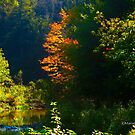 The advent of fall by MarianBendeth