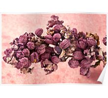 Dried Lilac Blossom Macro  Poster