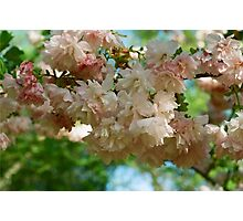 Cherry Blossoms in Brooklyn Photographic Print